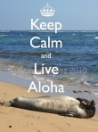 live aloha auction
